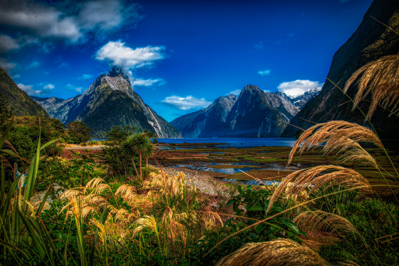Milford Sound 'Magical'