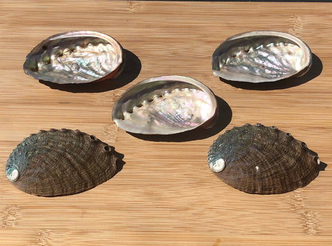 Abalone Shells (assorted 5pcs)