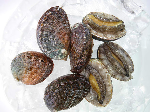 Previously Frozen Kona Abalone small size approx.40 pcs/2.2lbs (2.2lbs)