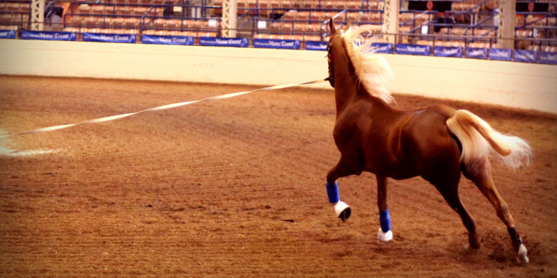 Lunging is an easy way for a horse to get an easy workout