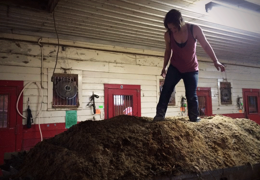 Standing on a mountain of horse manure can teach you some valuable lessons