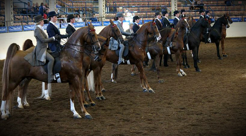 A lineup of equitation riders