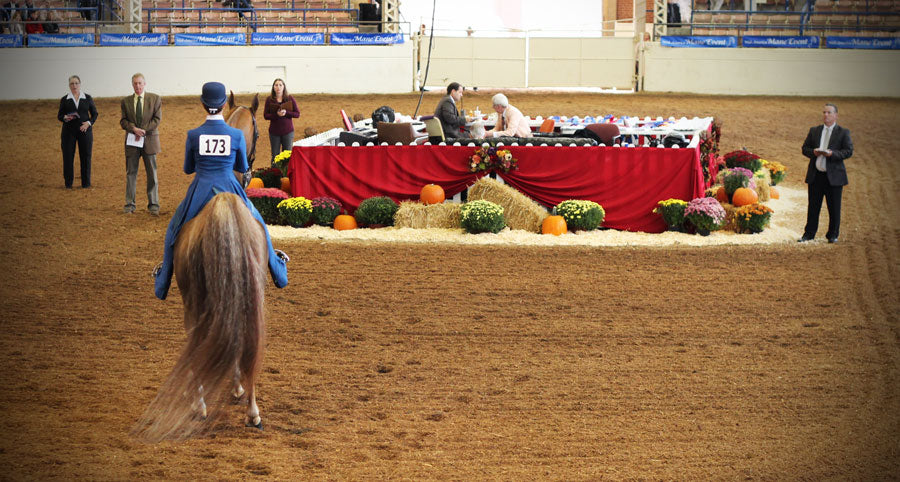 How to perfect a UPHA serpentine horse show pattern
