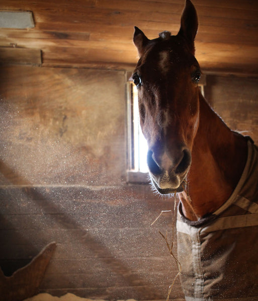 How horses teach us life skills