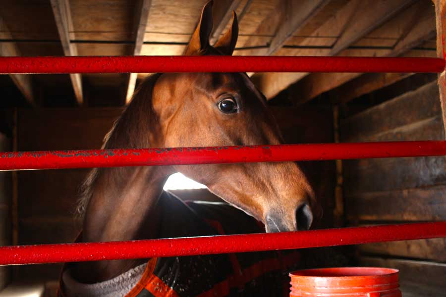 Horse care tips to get your equestrian friend ready for show season