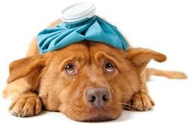 HOW TO SPOT SIGNS OF ONCOMING DISEASES IN YOUR PET?
