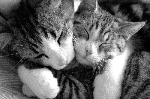 JUNE 4: NATIONAL HUG YOUR CAT DAY