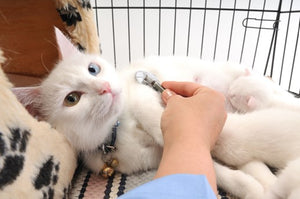 KNOW YOUR CAT'S SPECIAL NEEDS: HEALTH AND HYGIENE