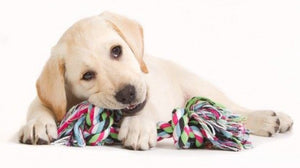 HOW TO CHOOSE THE RIGHT KIND OF TOY FOR YOUR DOG?