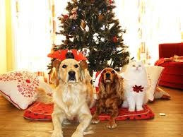 WAYS TO CELEBRATE CHRISTMAS WITH YOUR DOG