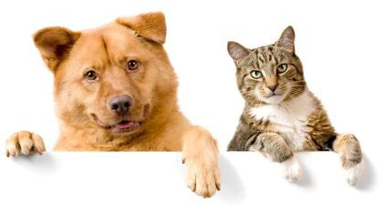 ARE DOGS BETTER OR CATS?