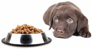 WHY YOUR DOG DOESN'T EAT?