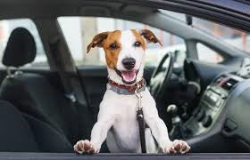 UBER LAUNCHES PET UBER