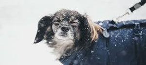 WINTER CARE FOR YOUR DOG'S COAT