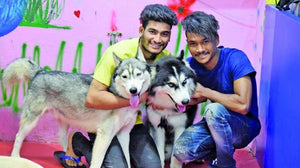 VASTRAPUR'S DOG PETTING CENTRE IS STEALING OUR HEARTS