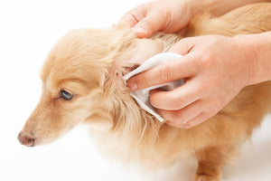 Tips For Cleaning Your Dog's Ear
