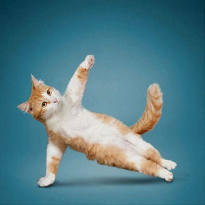 EXERCISES YOUR CAT WILL ENJOY