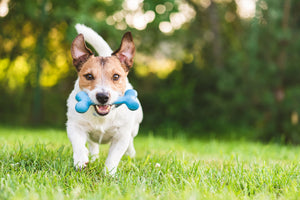 All About Fetch Toys