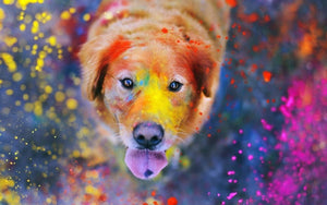 CAN YOUR PETS PLAY HOLI?