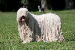 THE MOP DOG-KOMANDOR