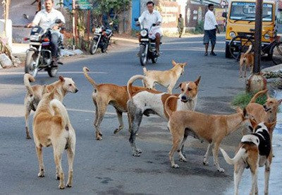 THIS IS BIG! HIGH COURT DECLARES ALL ANIMALS IN HARYANA AND PUNJAB AS LEGAL PERSONS