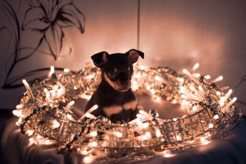 HOW TO HAVE A PET FRIENDLY DIWALI?