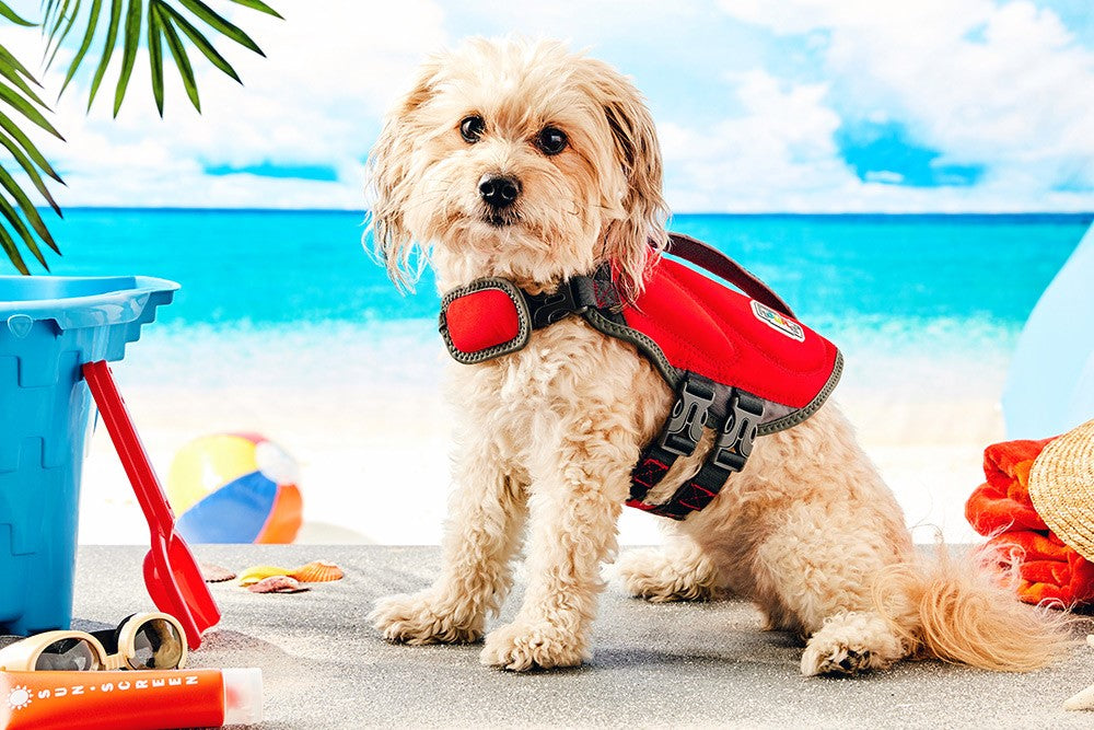 TIPS BEFORE PLANNING PET-VACATION