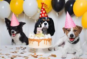 EMERGING PET PARTY CULTURE