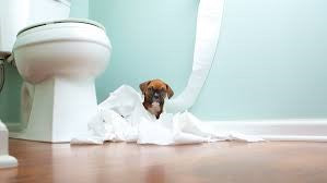 HOW TO POTTY TRAIN YOUR PUPPY?