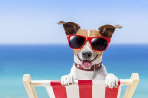 HOW TO KEEP YOUR PETS COMFORTABLE THIS SUMMER