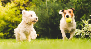 10 FUN GAMES TO PLAY WITH YOUR DOG THIS SUMMER