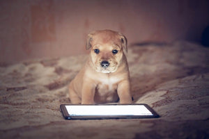 TECHNOLOGY FOR YOUR DOGS