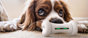 HOW TECHNOLOGY IS CHANGING WHAT'S POPULAR IN THE PET INDUSTRY