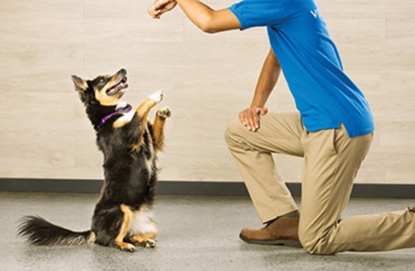 FIND OUT THE QUALITIES OF A GOOD PET-TRAINER