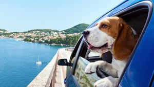 TIPS FOR TRAVELING ALONE WITH A PET