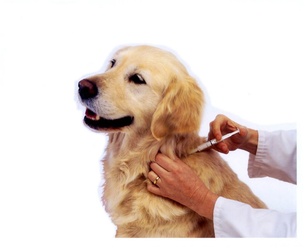 Vaccination Guide For Dog