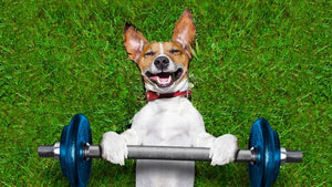 5 THINGS YOU CAN DO TO HELP YOUR DOG GAIN WEIGHT