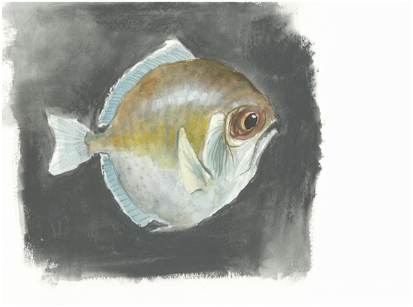 Sulky fish - Isabelle Issaverdens
