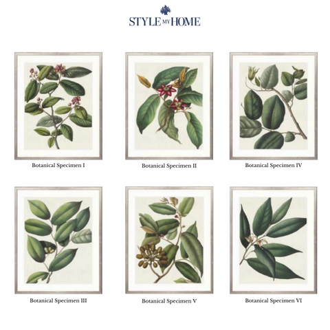 Von Mueller Botanical Framed Artwork Collection