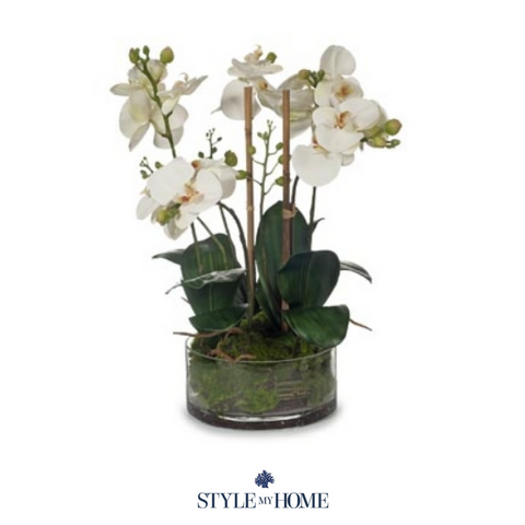 Orchid Phalaenopsis in Bowl Eggshell  - 49cm