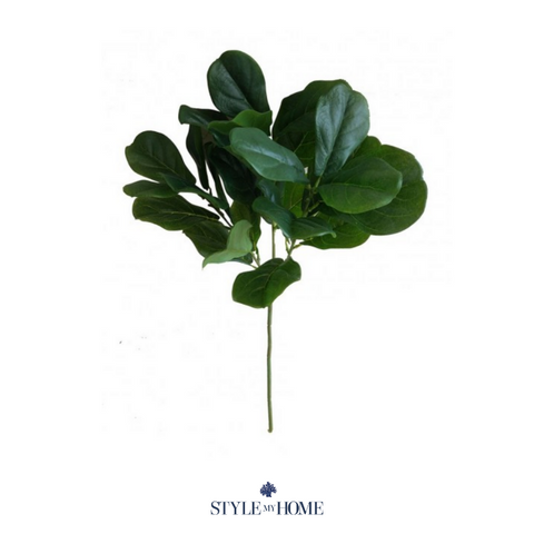 Fiddle Leaf Stem