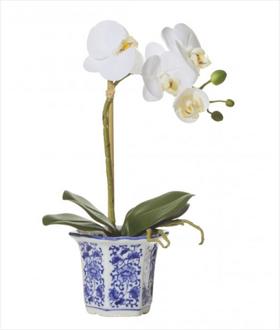 Orchid Phalaenopsis In Blue & White Pot 50cm
