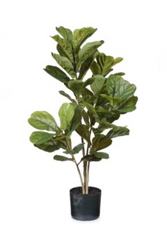 Fiddle Leaf Fig Plant 98cm
