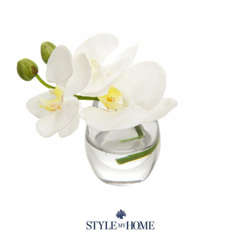 Z Phalaenopsis in Glass Vase