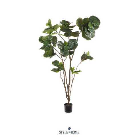 Fiddle Leaf Fig Plant 243cm