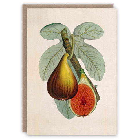 Fig Plant