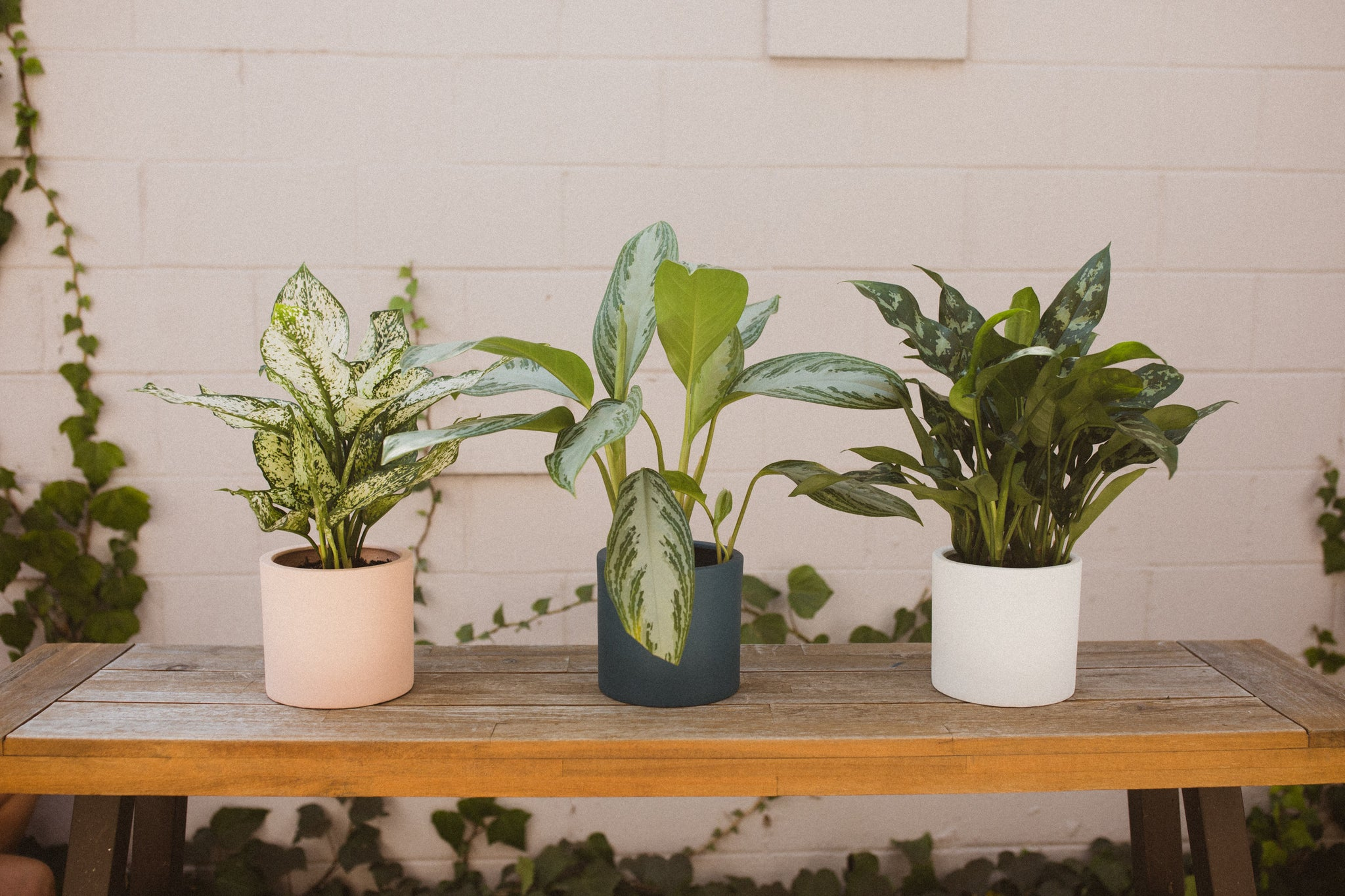 Best Plants for Plant Newbs