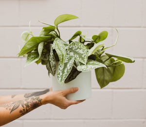 A Guide to Repotting Houseplants