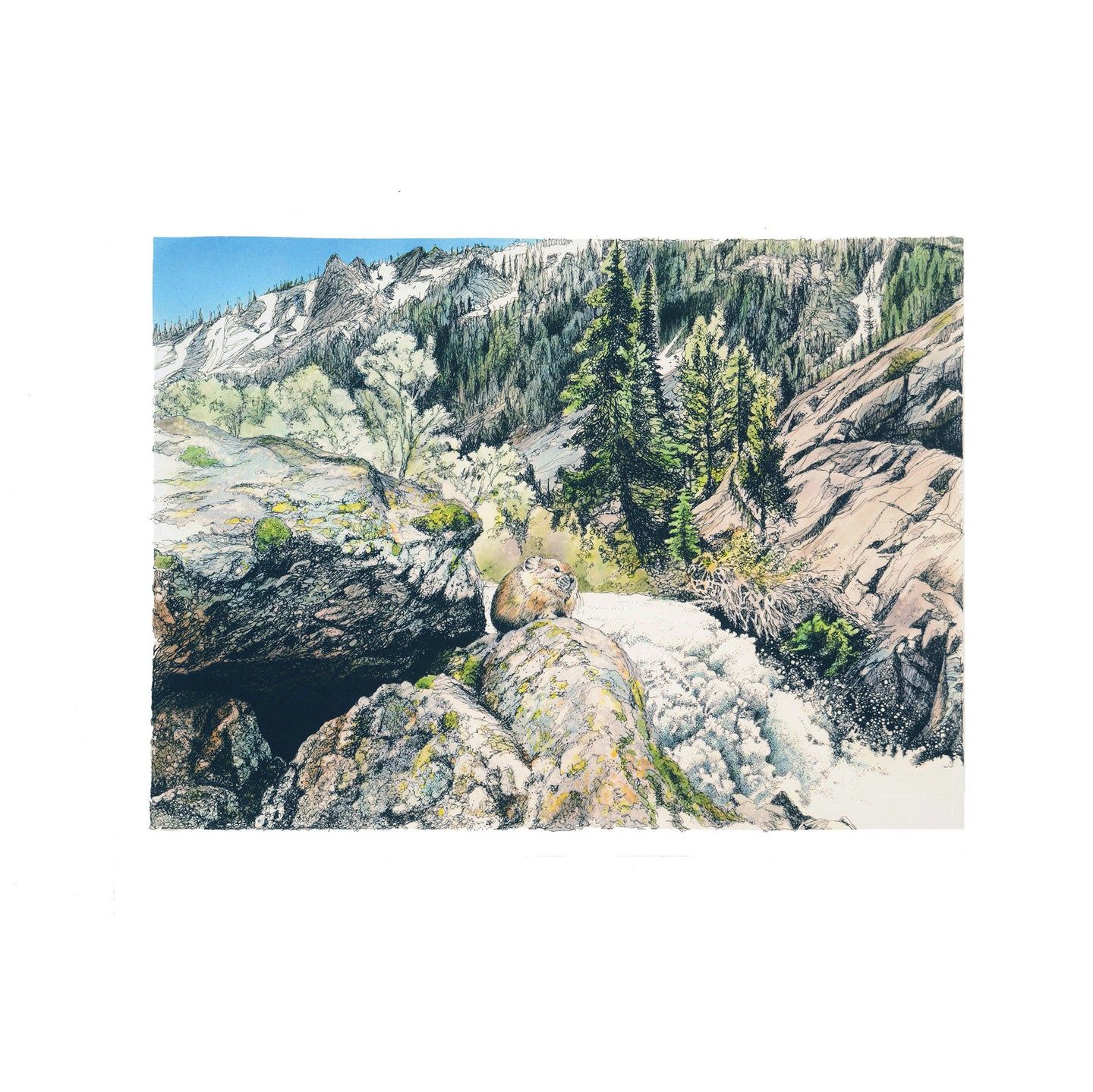Pika on rock giclee, Grand Teton National Park, Wyoming