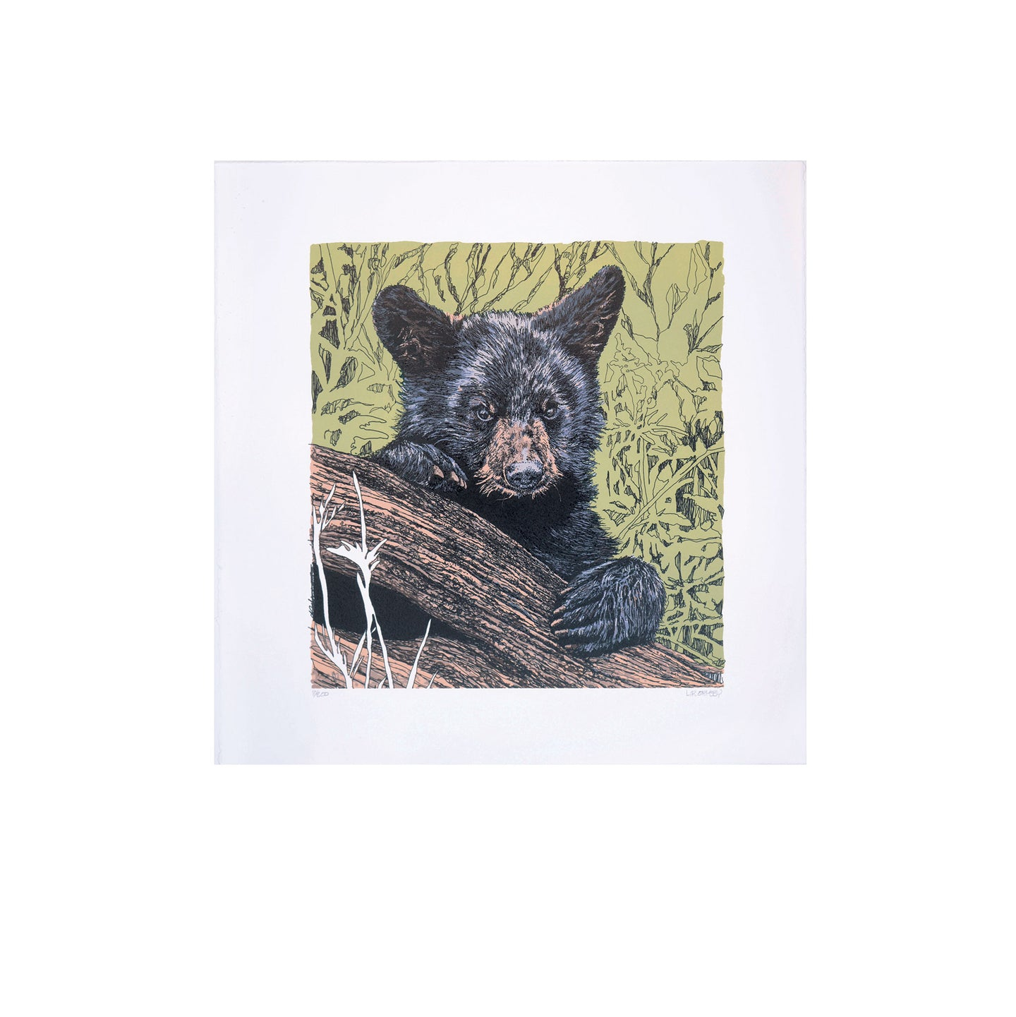 Black Bear cub lithograph framed, Great Smoky Mountain National Park, Tennessee